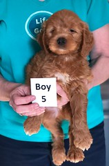 Holly Boy 5 pic 4 3-27