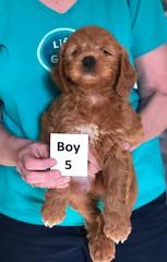 Holly Boy 5 pic 3 3-27