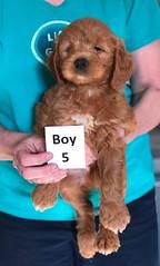 Holly Boy 5 pic 2 3-27