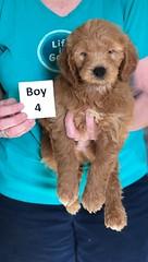 Holly Boy 4 pic 3 3-27