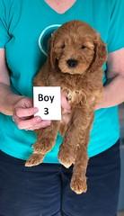 Holly Boy 3 3-27
