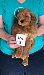 Holly Boy 3 pic 4 3-27