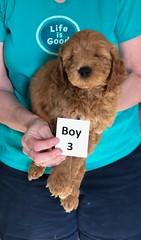 Holly Boy 3 pic 3 3-27