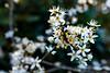 2020 Warwickshire Spring 192 Solihull