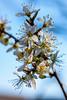 2020 Warwickshire Spring 185 Solihull