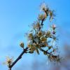 2020 Warwickshire Spring 173 Solihull mix e