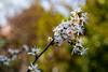 2020 Warwickshire Spring 191 Solihull