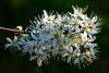 2020 Warwickshire Spring 189 Solihull