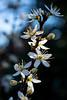 2020 Warwickshire Spring 179 Solihull