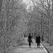 Walks with Social Distancing