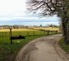 Photo of North Downs Way
