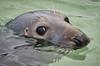 Seal in St Ives.jpg