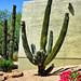 Super Cactus