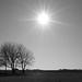 Sunny day ☀️
