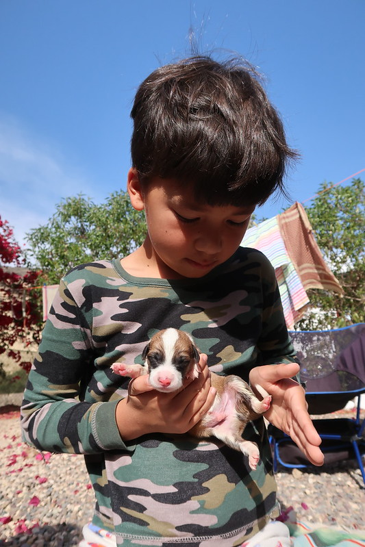 Rescuing day old puppies abandoned in a box in the Moroccan desert (Morocco Animal Aid, Agadir)