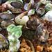 Seafood Paella from Pescadeli, Bethesda, Maryland