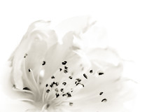 À l'ombre des fleurs en femmes - 19
