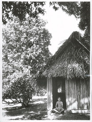 A typical Rarotonga hut, 1969