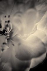 À l'ombre des fleurs en femmes - 21