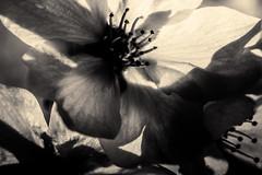 À l'ombre des fleurs en femmes - 26