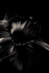 À l'ombre des fleurs en femmes - 17