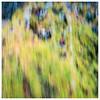 034 ICM - Tree, Corbenic Poetry Path