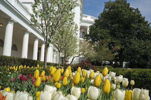 Rose Garden Flowers by The White House, on Flickr