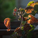 Susent, social distancing front porch begonia bokeh