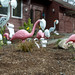 Covid-19 avoiding pink flamingo lawn ornaments