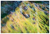035 ICM - Tree, Corbenic Poetry Path