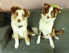 Lacy und Maxy