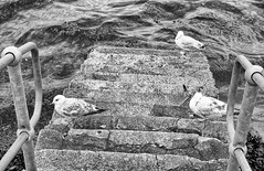 Photo of gulls on steps
