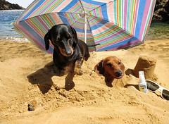 Photo of Doggos Beach Bury