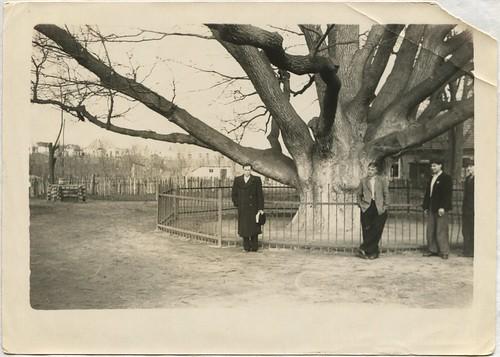 Запорожье - Запорожский дуб 19550423 002 PAPER600 [Волок А.М.] ©  Alexander Volok