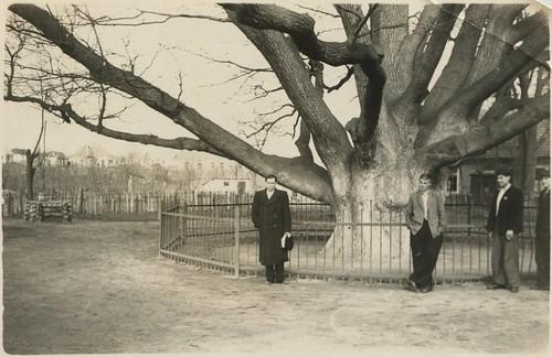 Запорожье - Запорожский дуб 19550423 001 PAPER1600 [Волок А.М.] ©  Alexander Volok