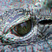 Eye of Croc Blijdorp Zoo 3D anaglyph