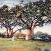 Baobabs (Somalie Italienne)