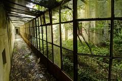 Jungle Corridor...
