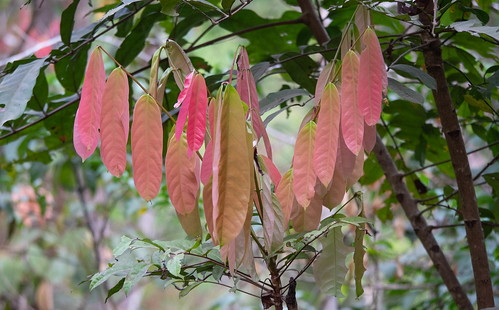 New leaves sprout in all color variances