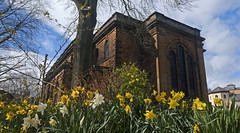 Photo of St Andrew's Penrith with daffs.