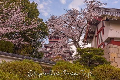 Sakura 2020 at Fushimi Momoyama Castles, Kyoto-Japan.