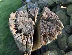 Photo of Weathered wood