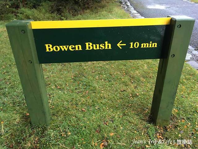 紐西蘭庫克山Bowen Bush Walk