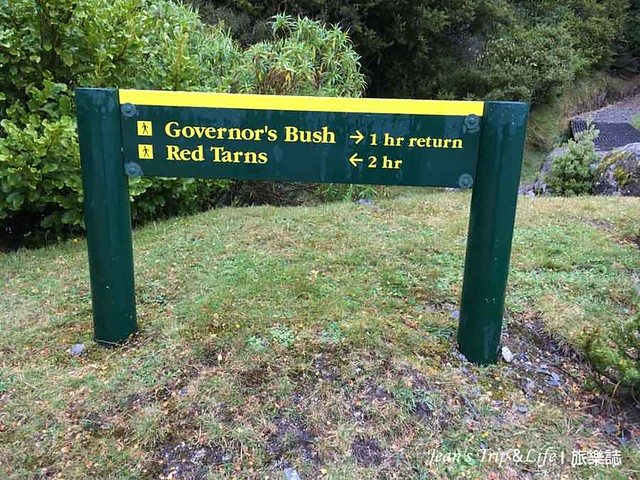 紐西蘭庫克山Governors Bush Walk