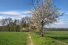 Photo of Farm path near Isham, Northants