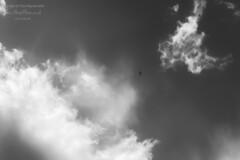 Photo of Daily Apocalypse: 5