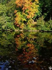 Photo of autumnal tones.
