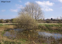 Photo of tree in pond