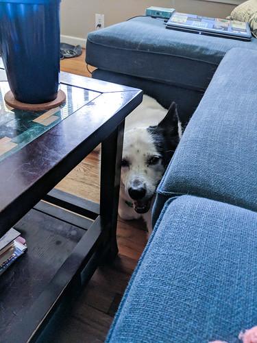 Somebody's Watching Me...