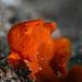 Frogfish 5